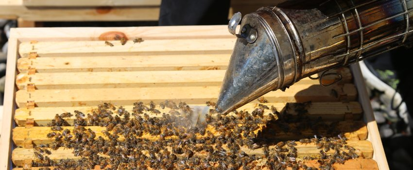 Toronto Bees Find a New Home at the Colonnade